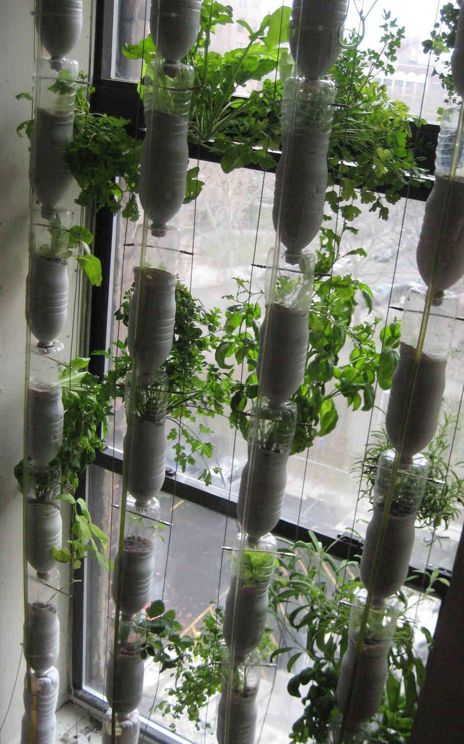 Вертикальный огород на балконе