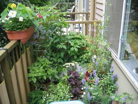 Image source: permaculturesunshinecoast.com