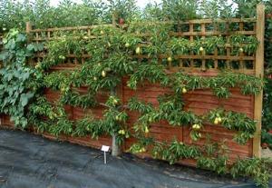 Image source: gardenaginginplace.com