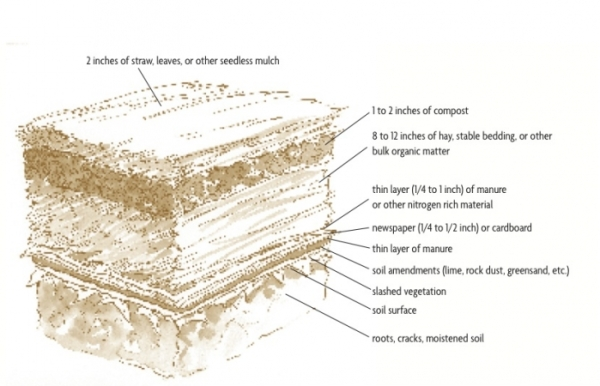 Diagram from Toby Hemenway's book Gaia's Garden.