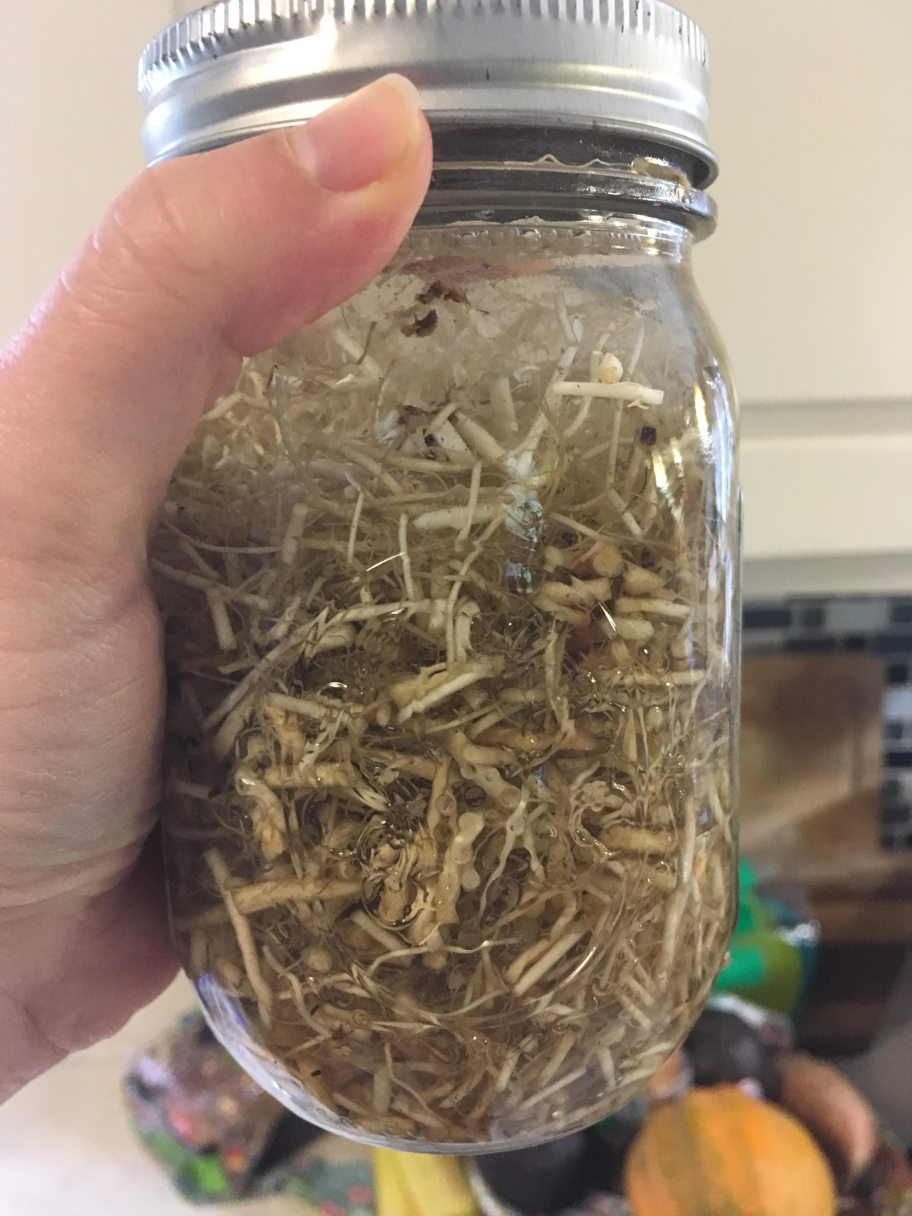 Valerian Root Tincture